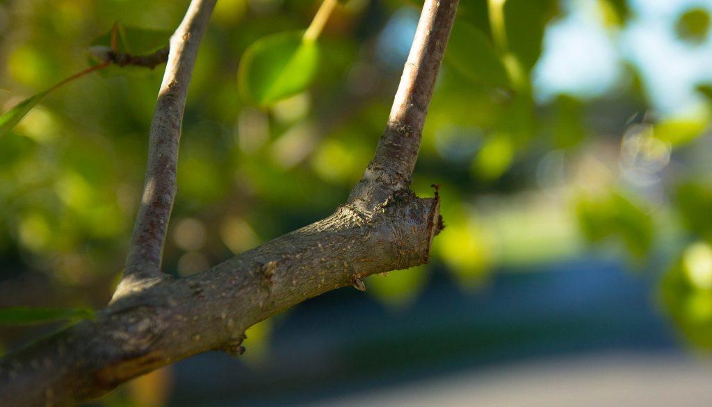 Tree and shrub care