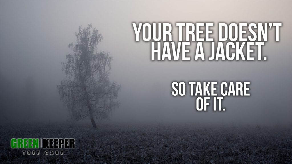 Keep Your Trees Healthy in the Winter
