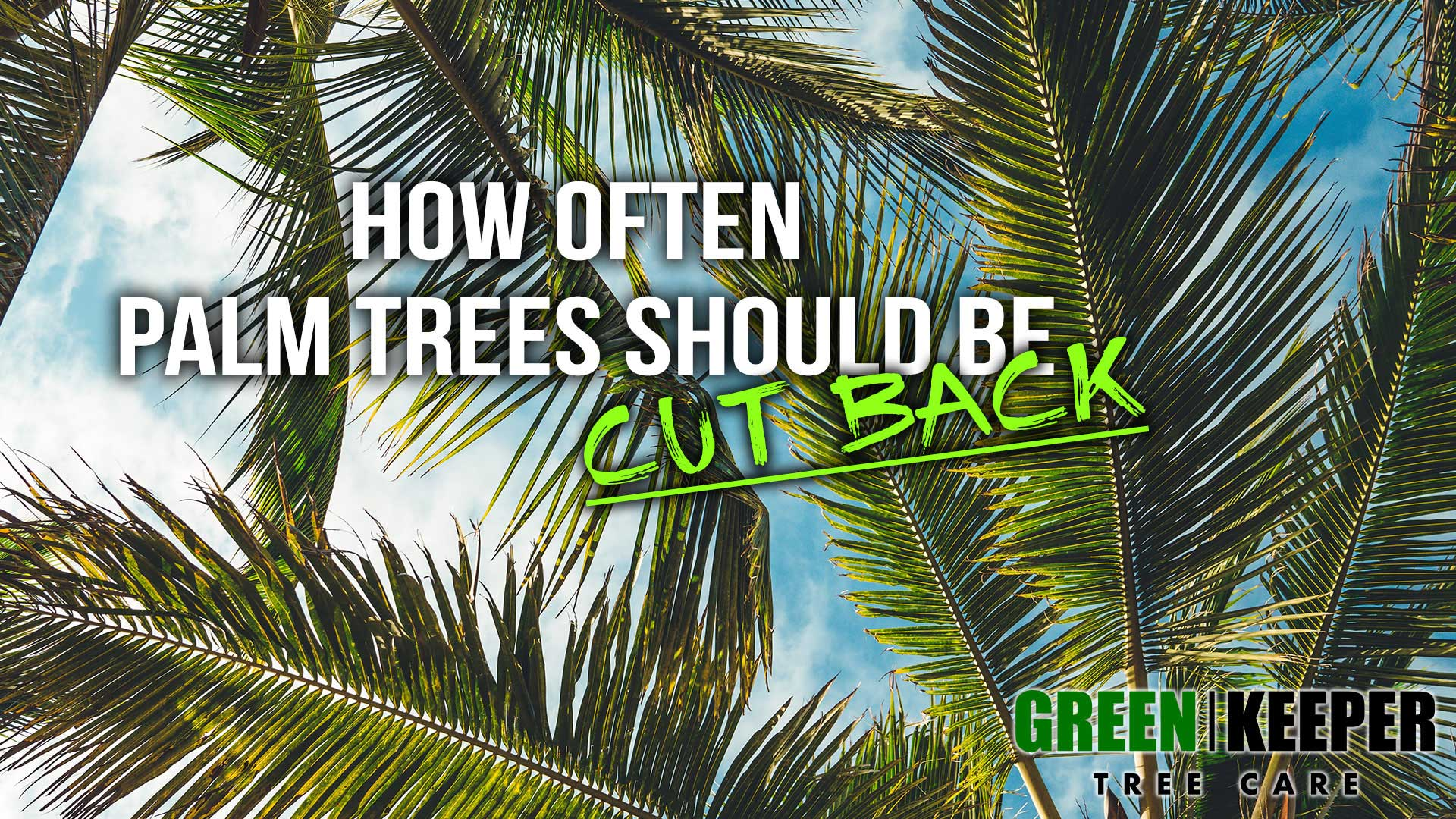 How often palm trees should be cut back