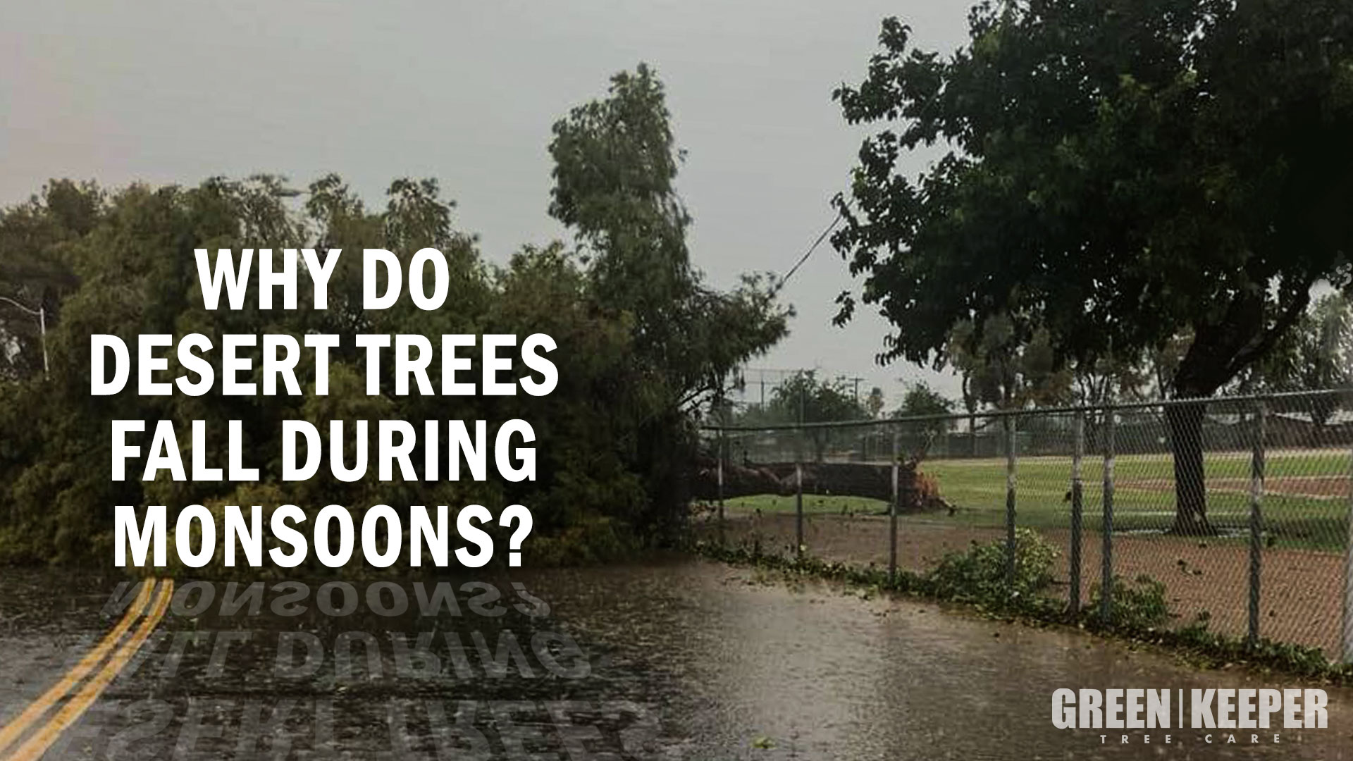 why-desert-trees-blow-over-in-monsoons-and-dust-storms