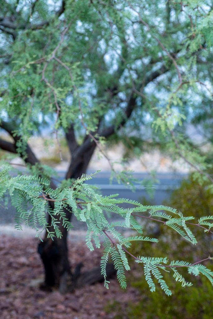 tree-care-in-tempe-arizona